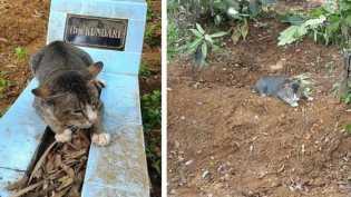 Tunggui Makam Majikan, Kucing Asal Kebumen Jadi Sorotan Media Internasional