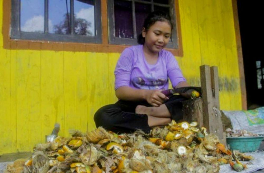 Naik Rp1.020, Harga Pinang Kering di Riau Jadi Rp17.560 Ribu per Kg