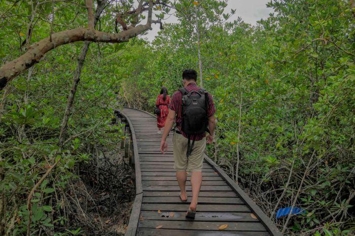 Pemprov Riau Dapat Bantuan Rp225 Miliar untuk Rehabilitasi 15 Ribu Hektar Mangrove