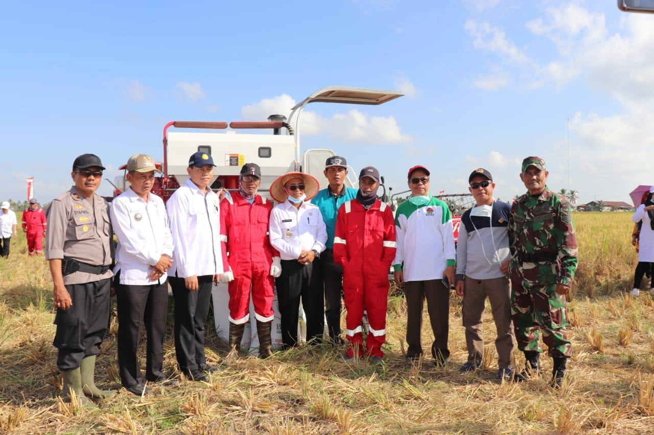 Target Swasembada Pangan, Pelalawan Perkuat Kawasan Pertanian Kuala Kampar