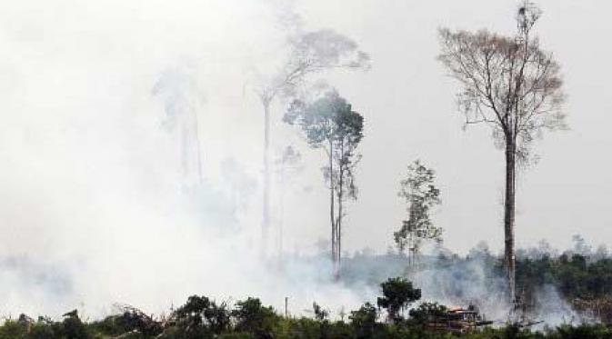 Kebakaran Lahan di Rangsang Pesisir Capai 50 Hektar