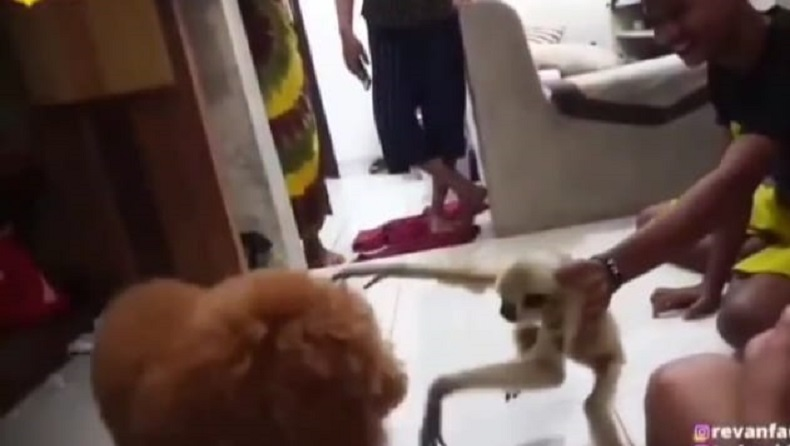 Kapolres Pelalawan Klarifikasi soal Video Viral Owa vs Anjing