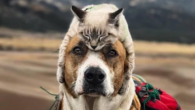 Kisah Anjing dan Kucing Akur Traveling Bareng Ini jadi Viral