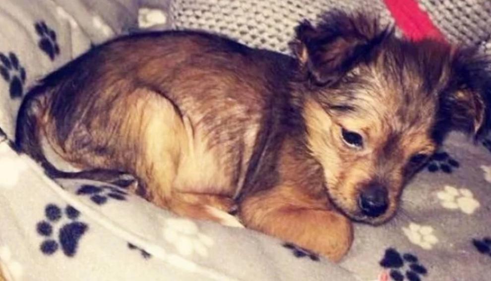 Pria Brutal Pukuli Anak Anjing Dihukum Penjara 2,5 Tahun