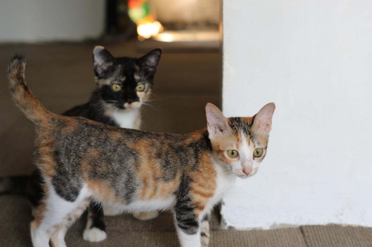 Kisah Nabi Muhammad Memotong Lengan Jubahnya Yang Ditiduri Muezza Kucing Kesayangannya