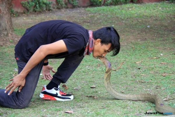 Dipatuk Kobra, Jenazah Pawang Dikelilingi Ular Peliharaannya