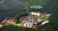 Belum Miliki Amdal, Perusahaan Sawit di Riau Terancam Denda Rp1 Miliar